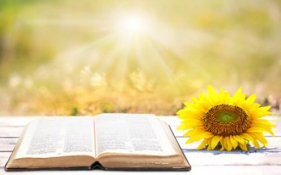 Using God's Word in your life